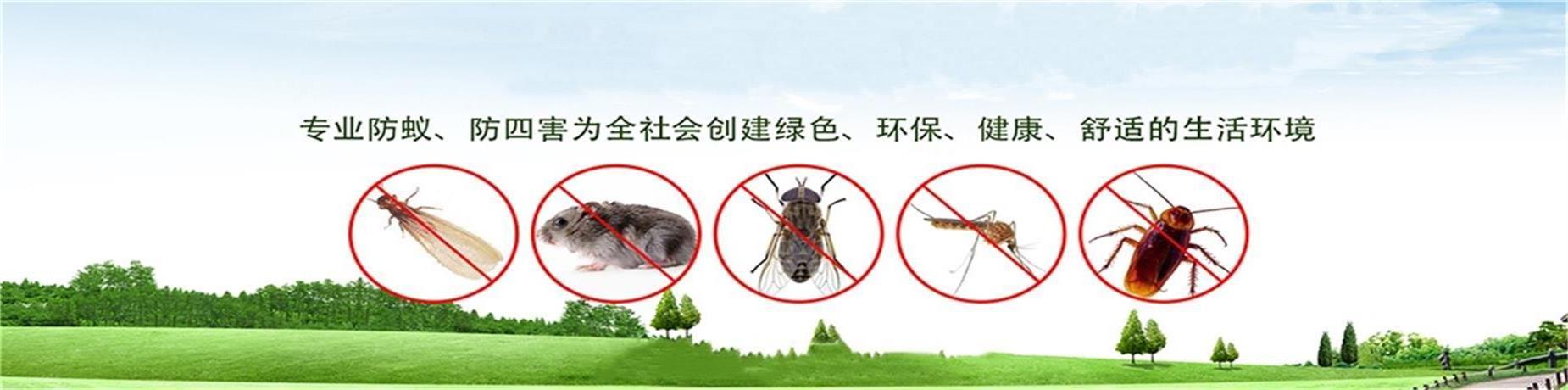 珠海白蟻防治公司
